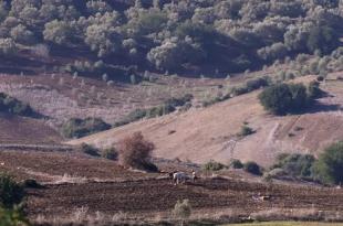 Politique foncière de l'Etat: Les réactions du monde agricole au message Royal adressé aux participants aux Assises nationales