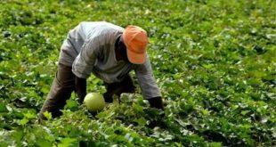 Sefrou/Fès-Meknès agriculture, pour intégrer les migrants subsahariens