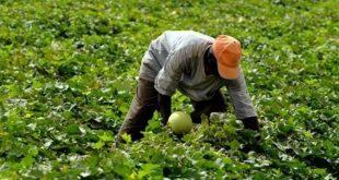 Les petits agriculteurs produisent 35% de la nourriture mondiale
