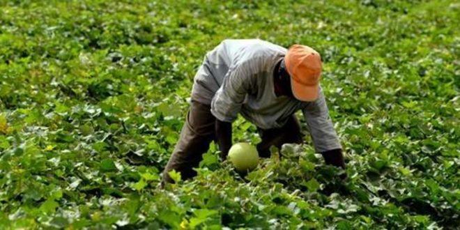 OCP 100 millions de dollars pour dynamiser agriculture africaine