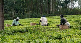 Nigeria OCP forme les jeunes pour dynamiser agriculture