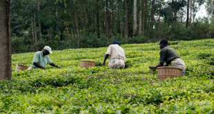 Covid-19-L-Afrique-pourrait-perdre-4,8-milliards-de-dollars-d-exportations-agricoles