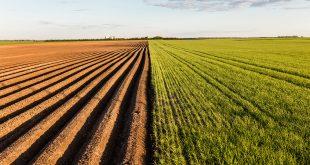 Le phosphore conditionne la formation d'oxydes de fer dans les sols