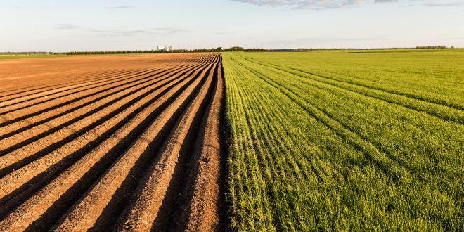 La sécheresse un danger croissant agriculture marocaine