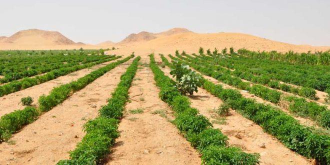 agriculture dans le désert, une réponse à la sécurité alimentaire