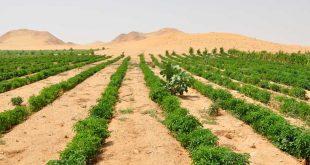 plante désert mécanisme absorption eau