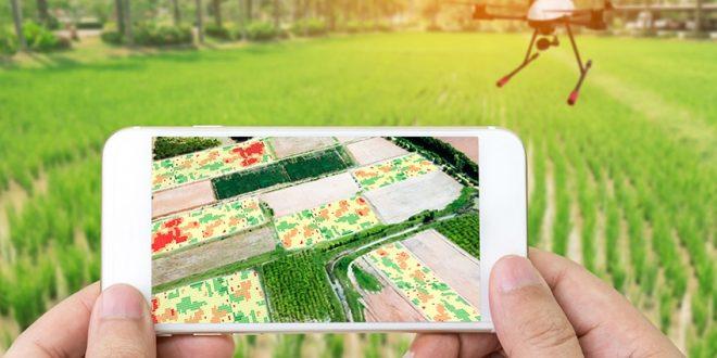 Une startup marocaine est parmi les entreprises agricoles les plus prospères