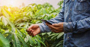 La digitalisation de l'agriculture : une tendance marocaine génératrice de succès