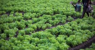 Agriculture: Le Ghana sollicite le savoir-faire marocain
