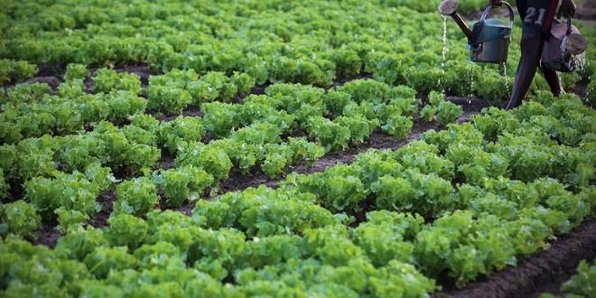 Agriculture: savoir-faire des experts marocains au profit du Tchad