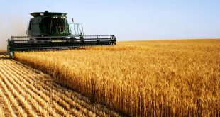 Fès-Meknès : une baisse considérable de la production agricole se profile