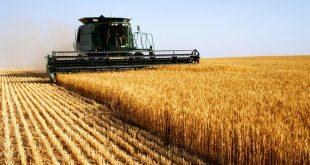 Covid-19-L-Organisation-arabe-du-développement-agricole-propose-des-mesures-pour-garantir-la-sécurité-alimentaire