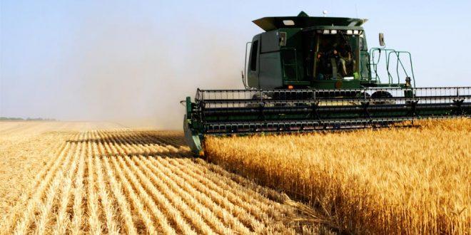 Béni Mellal-Khénifra : 150.000 qtx de semences au profit des agriculteurs
