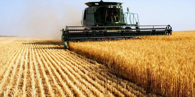Béni Mellal-Khénifra superficie de céréales cultivée