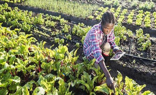 1,7 million de petits agriculteurs augmenteront leur production grâce au numérique