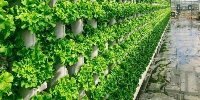 Agriculture verticale en Afrique : Le Cameroun se lance !