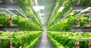 Bayer-se-lance-dans-l-agriculture-verticale-avec-sa-propre-startup