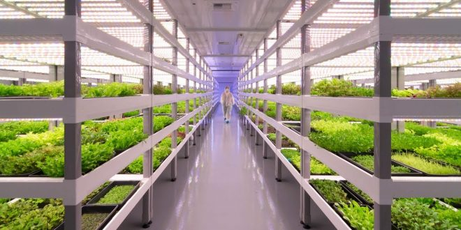 Agriculture verticale : L'avenir vers une agriculture durable et sans eau