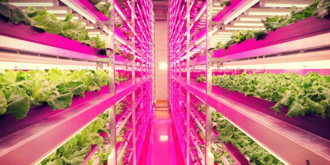 agriculture verticale alimentation