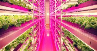 L'agriculture verticale est-elle l'avenir de la culture des herbes ?