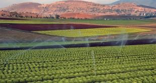 Le Maroc consolide ses relations agricoles avec le Pays-Bas
