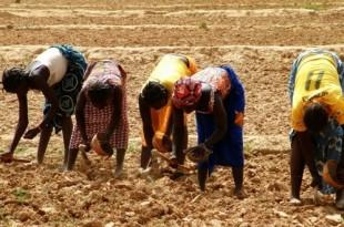Mesure d'urgence pour l'agriculture en Afrique du Sud