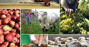 Campagne agricole: Des mesures s'imposent face aux problèmes de la campagne agricole au Maroc