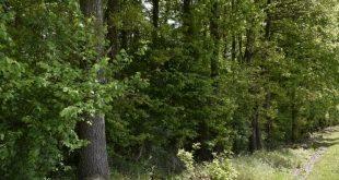 Lancement du projet de dialogue technique agricole et forestier maroco-allemand