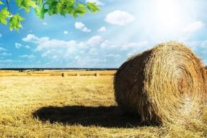 Les agriculteurs français ne vivent plus de l'agriculture