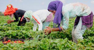 Soutien aux jeunes marocains pour une réinsertion réussie dans le secteur agricole