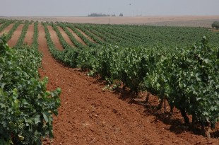 L'agriculture marocaine doit s'adapter face...