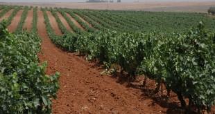agriculture_maroc