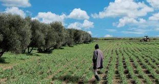 L'Oriental revient sur les enjeux de l'agriculture solidaire dans la région