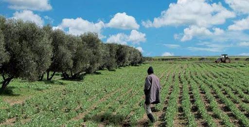 L'activité agricole génère 12 MMDH à Béni Mellal-Khénifra