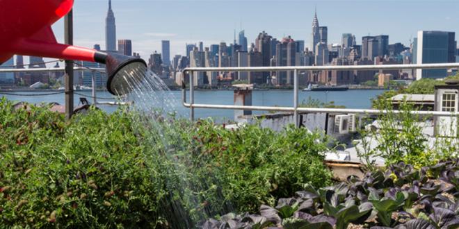 L'agriculture urbaine: plus de social que d'agricole?