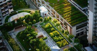 Vers une agriculture urbaine au Maroc