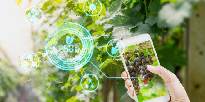Sécurité alimentaire avenir agriculture de précision en Afrique