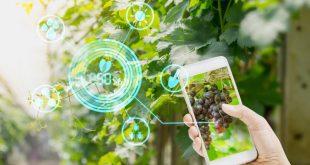 agriculture durable en Afrique ICESCO
