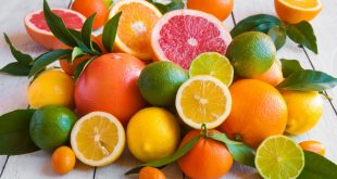 Maroc les exportations agrumes en hausse de 9%
