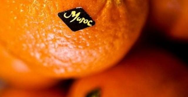 L'objectif à l'export des agrumes du Maroc loin d'être atteint