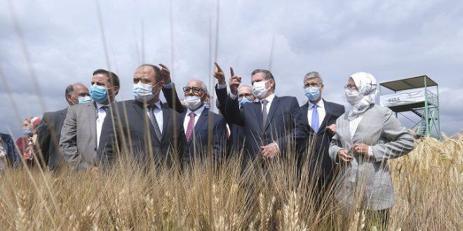Aziz Akhannouch visite un domaine de développement de nouvelles variétés céréalières
