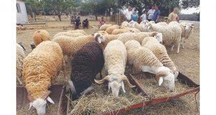 Aïd al-Adha/Covid-19: Le ministre de l'agriculture rassure sur l'état de santé du bétail