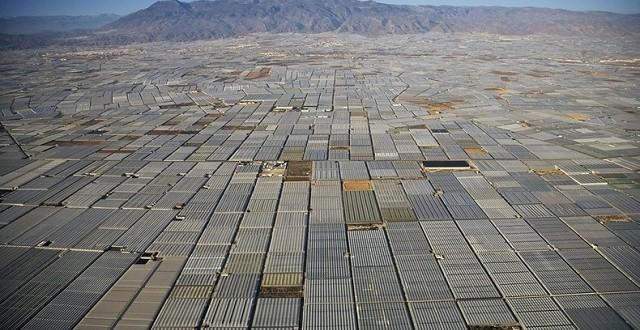 A Alméria, les surfaces de production bio augmentent de 20%