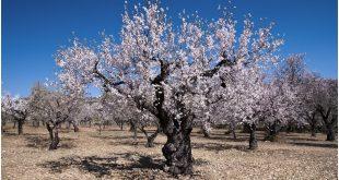 Khénifra lancement de plusieurs projets investissement agriculture