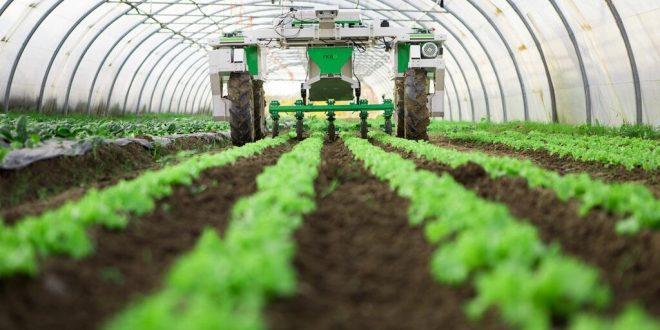 Maroc modèle développement agricole