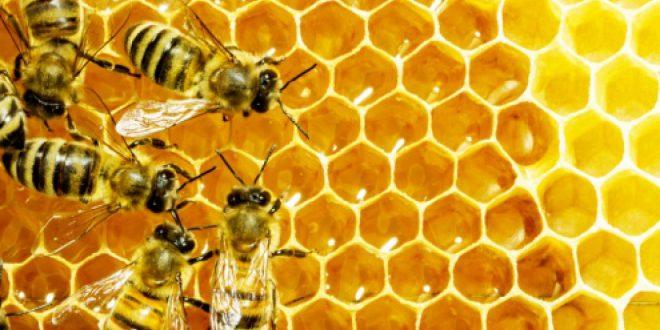 Apiculture production miel Casablanca-Settat