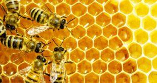 Azilal : la production de miel augmente de manière considérable
