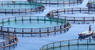 Aquaculture : Soutien aux porteurs de projets de Souss-Massa et Guelmim-Oued Noun