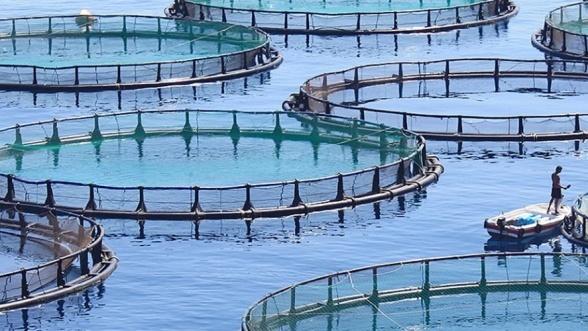L'aquaculture gagne du terrain et vise une production annuelle de 156.000 tonnes