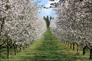 Arboriculture : programme de plantation à Al Hoceima